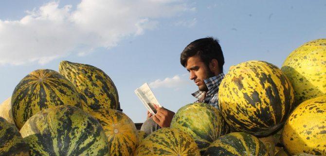 Kavun satarken ders çalışıp kitap okuyor